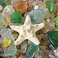 Starfish Fine Art Photography Seaglass Coastal Beach by Baslee Troutman