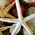 Stars Of The Sea by Colleen Kammerer