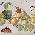 Still Life Of Branch Of Gooseberries by Jan Van Kessel