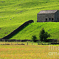 Stone barn and wildl...
