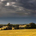Storm Brewing Over Corn by Matthew Bruce