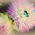 Strawflower Awakening by Shirley Sirois
