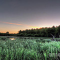 Streaky Swamp Sunrise by Deborah Smolinske