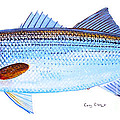 Striped Bass by Carey Chen