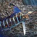 Striped Gem by Jason Mathias