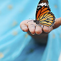 Striped Tiger Butterfly by Tim Gainey