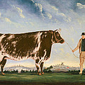 Study Of A Shorthorn by William Joseph Shayer