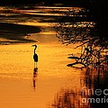 Sublime Silhouette by Al Powell Photography USA