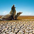 Suffering Seals by Carlos Caetano