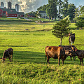 Summer On The Farm Poster by Bill  Wakeley