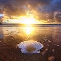 Summer Solstice by Sean Davey