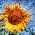 Sun Flower by Adrian Evans