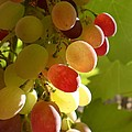 Sundrenched Grapes