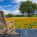 Sunflower Farm by Debra and Dave Vanderlaan