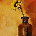 Sunflower In A Brown Bottle by Marsha Heiken