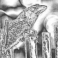 Sunning Lizard Chromed Print by Belinda Lee