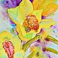 Sunny Splash Of Orchids by Beverley Harper Tinsley