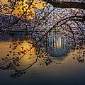 Sunrise At The Thomas Jefferson Memorial by Susan Candelario