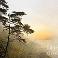 Sunrise In The Mist - D004200a-a by Daniel Dempster