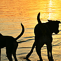 Sunset Dogs  by Laura Fasulo