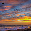 Sunset Flight by Robert Jensen