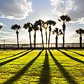 Sunset Sentinels by Debra and Dave Vanderlaan