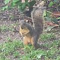 Suprised Mr. Squirrel