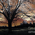 Surreal Fantasy Gothic Trees Nature Sunset by Kathy Fornal