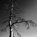 Survival Tree Print by Chad Dutson