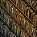 Swallow Feather Detail, Sem by Power And Syred