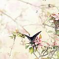 Swallowtail In Spring by Stephanie Frey