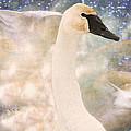Swan Journey by Kathy Bassett