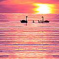 Swans On The Lake by Jon Neidert