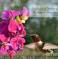 Sweet Pea Hummingbird Iv With Verse by Debbie Portwood