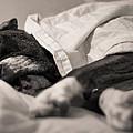 Sweet Sleeping Boxer by Stephanie McDowell