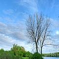 Swirly Sky And Tree by Deborah Smolinske