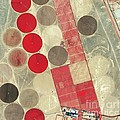 Tadco Farm Saudi Arabia Satellite by GeoEye