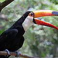 Talkative Toucan by Ginny Barklow