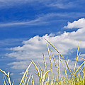 Tall Grass On Sand Dunes by Elena Elisseeva