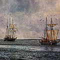 Tall Ships by Dale Kincaid