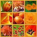 Tangerine Dream Window by Joan-Violet Stretch