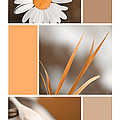 Tangerine Flowers Collage by Christina Rollo