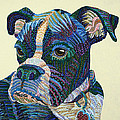 Tater - Portrait Of A Boxer by Erika Pochybova