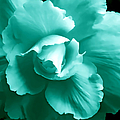Teal Green Begonia Floral by Jennie Marie Schell