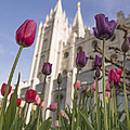Temple Tulips by Chad Dutson