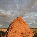 Termite Mound, Exmouth, Australia. by Science Photo Library