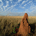 Termite Mound In Cerrado Grassland Emas by Tui De Roy