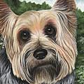 Terrier Pup