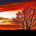 Texas Sunset by Darryl Dalton