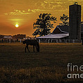The Beauty Of A Rural Sunset by Mary Carol Story